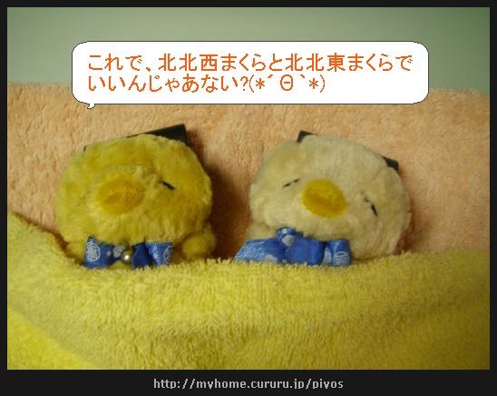 image2270009.jpg