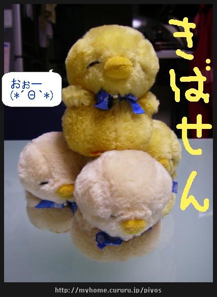 image4312994.jpg