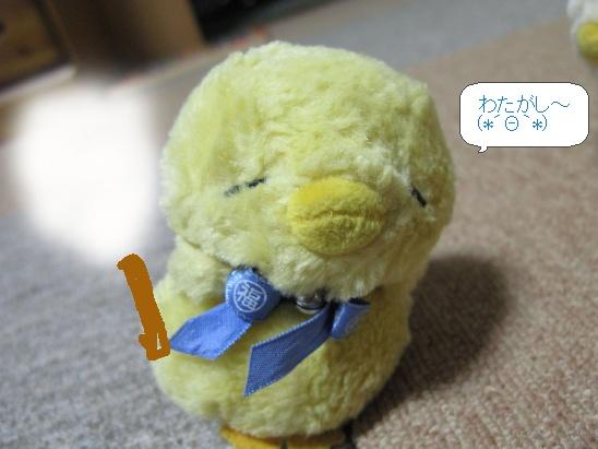 image6328095.jpg