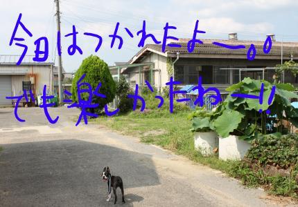 ponzu24+121_edited-2_convert_20090805195510[1]