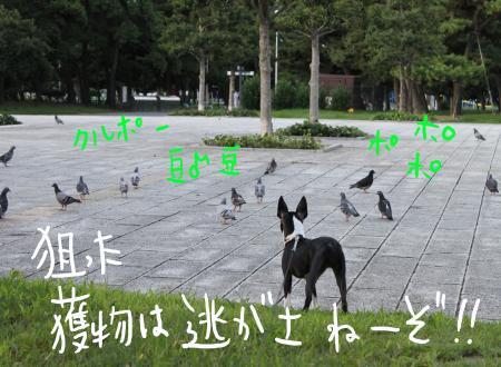 ponzu29+114_edited-1_convert_20090818200045.jpg