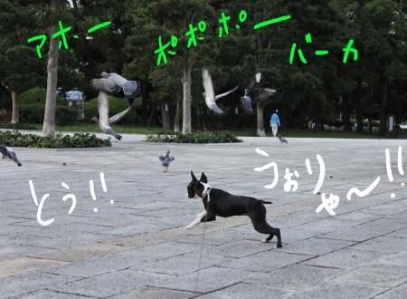 ponzu29+116_edited-1_convert_20090818200242.jpg