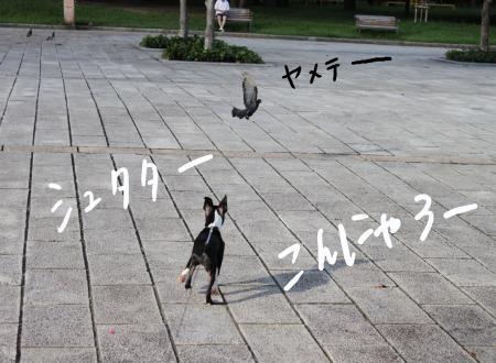 ponzu29+117_edited-1_convert_20090818200430.jpg