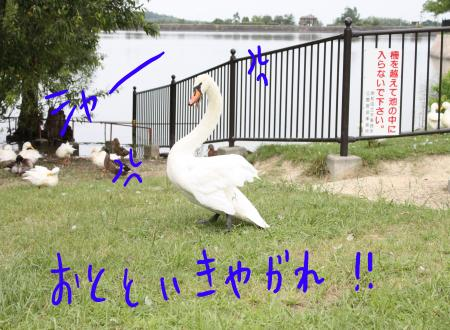 ponzu31+182_edited-1_convert_20090822073036.jpg
