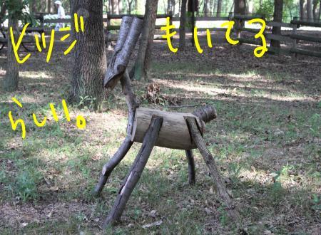 ponzu32+088_edited-1_convert_20090823125440.jpg
