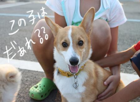 ponzu36+268_edited-1_convert_20090901062245.jpg