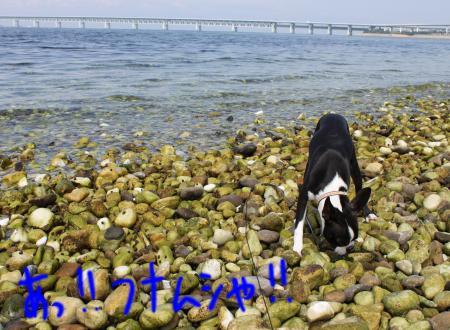 ponzu38+068_edited-1_convert_20090905065959.jpg