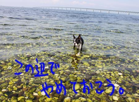 ponzu38+094_edited-1_convert_20090905070517.jpg