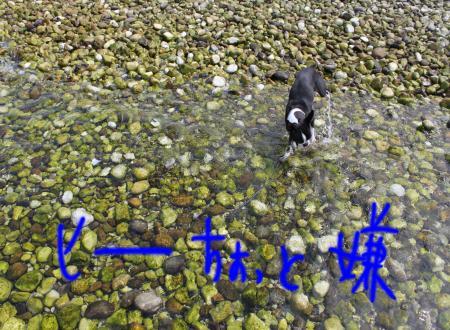 ponzu38+100_edited-1_convert_20090905070844.jpg
