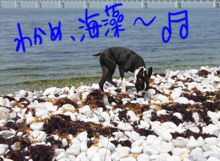 ponzu38+109_edited-1_convert_20090905070936.jpg