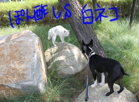 ponzu38+144_edited-1_convert_20090905071427.jpg