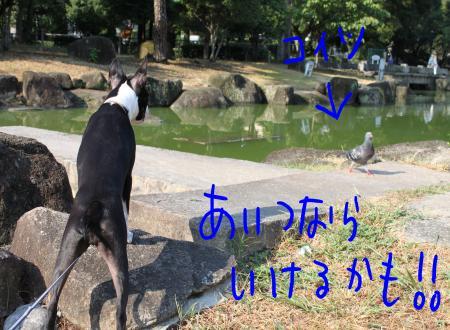 ponzu43+052_edited-1_convert_20090913203504.jpg