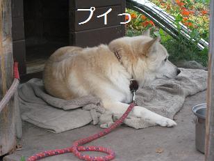2009_0819_155847-IMG_6028.jpg