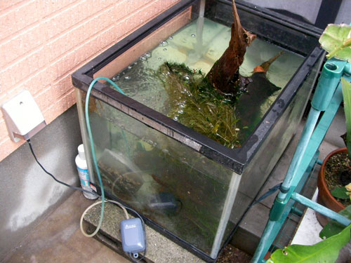 お魚の避難場所