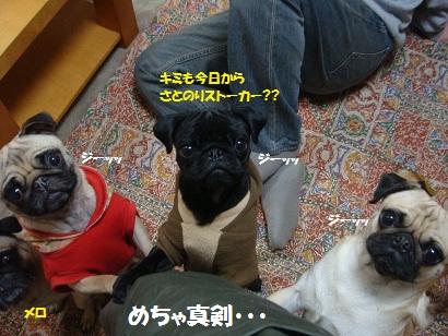 DSC02374_20110723164000.jpg