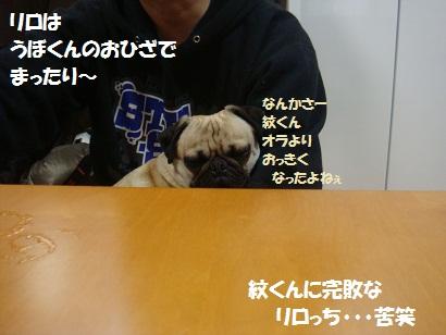 DSC02397_20110723171012.jpg