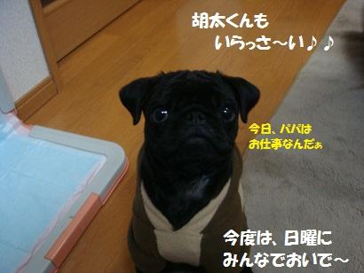 DSC02420_20110723151320.jpg