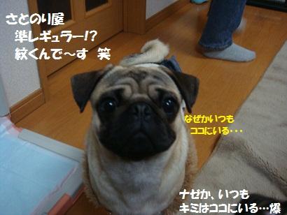 DSC02423_20110723152926.jpg