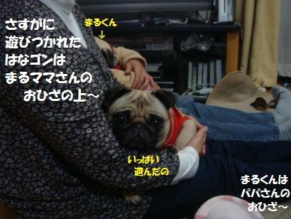 DSC02448_20110723171012.jpg