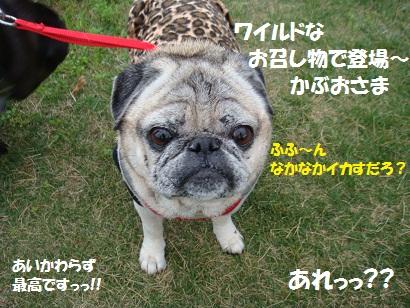 DSC07620_20110806034112.jpg