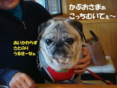 DSC07651_20110806034112.jpg