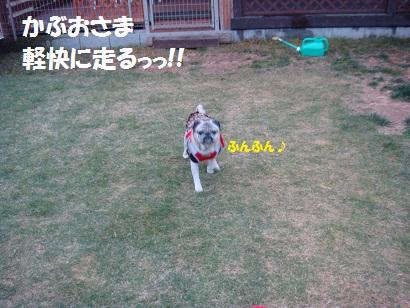 DSC07732_20110806034511.jpg