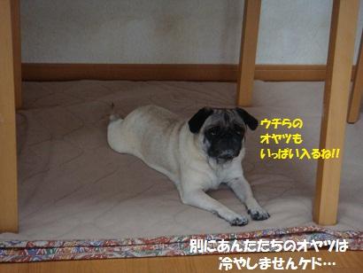 DSC08745_20110723214424.jpg