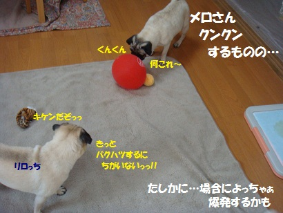 DSC08778_20110728194000.jpg