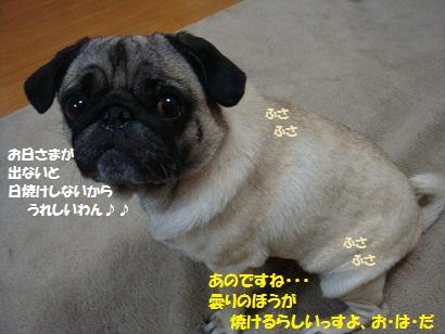 DSC09187_20110804190304.jpg