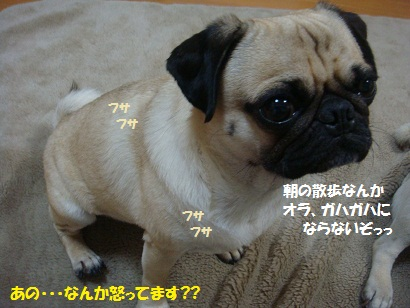 DSC09203_20110804190304.jpg