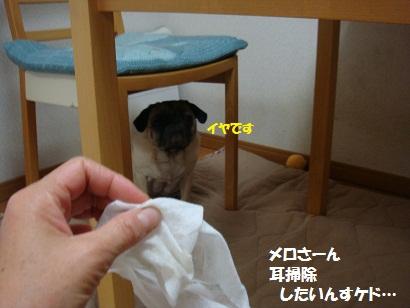 DSC09316_20110804230228.jpg