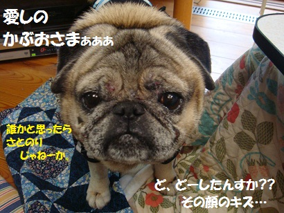 DSC09449_20110806035610.jpg