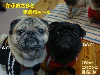 DSC09467_20110806035610.jpg