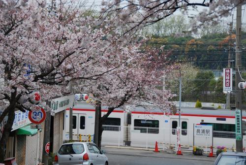 桜と電車2