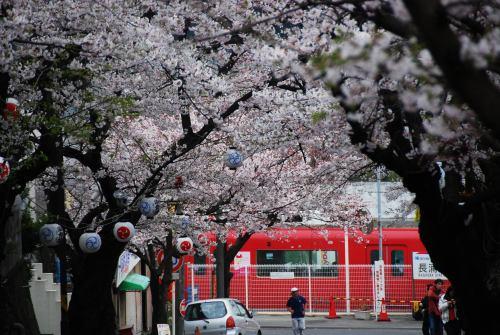 桜と電車3