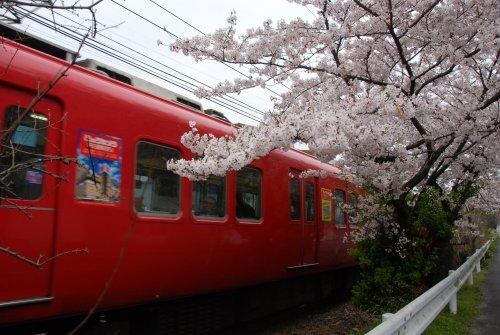 桜と電車5