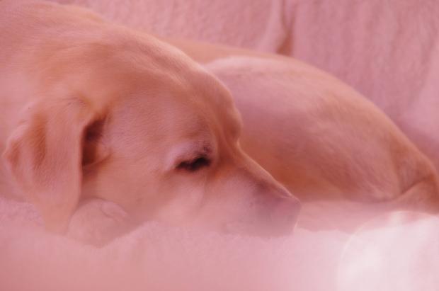 幸せモードな犬♪