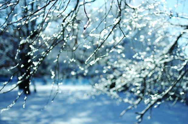 公園雪景色ね。