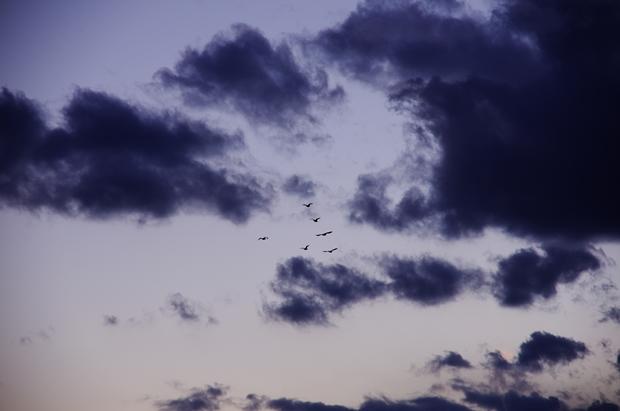 鳥が悲しく飛んでいくような感じが撮りた~い♪