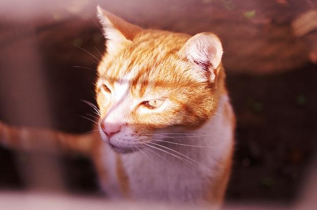 ぱずーにガン飛ばしている近所の猫。