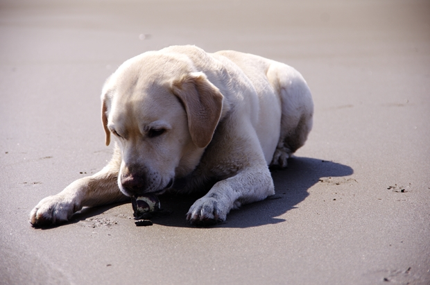 貝殻見つけた♪