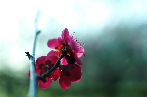 気に咲く花ってもの悲しい