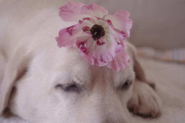 お花なんか置かれるなんてフツーのこと。