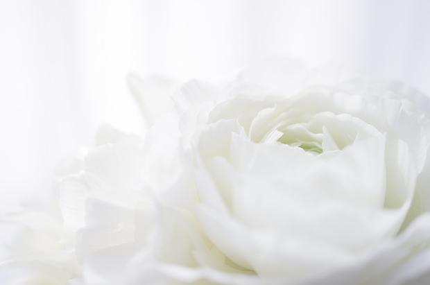 青い花、白い花が特に好きですぅ