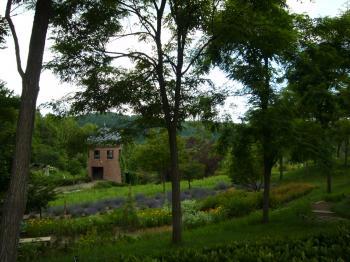ラベンダー滝野3