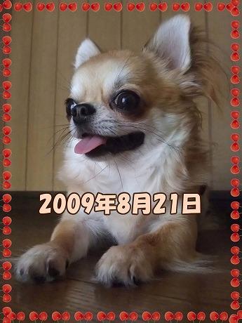 2009-08-19-08.jpg