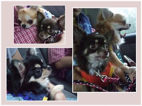 2009-09-12-39.jpg