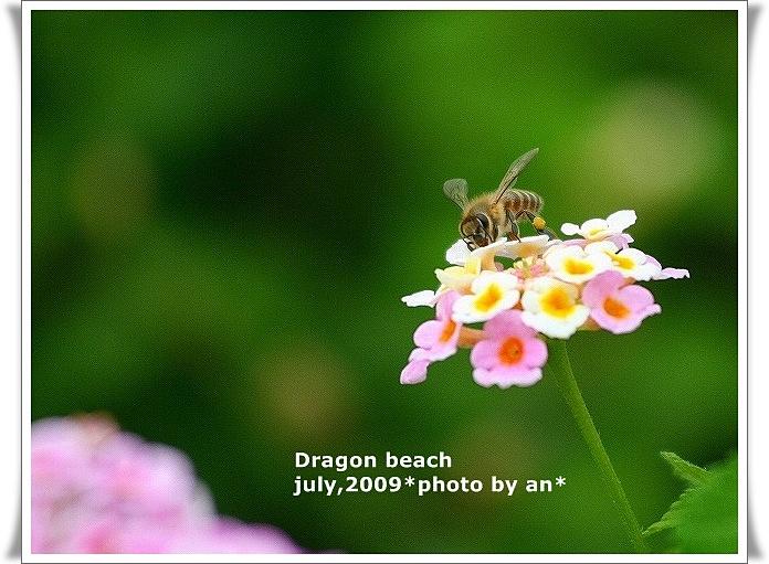 20090716_7097.jpg