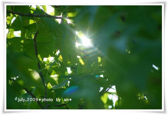 20090723_7238.jpg