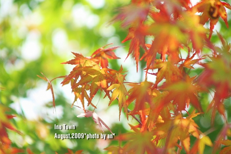 20090804_9157.jpg